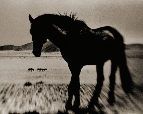Antti Viitala Namibian Feral Horses.jpg