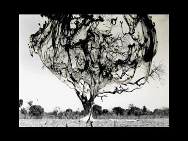charley case-atomic_tree_300[1][2].jpg
