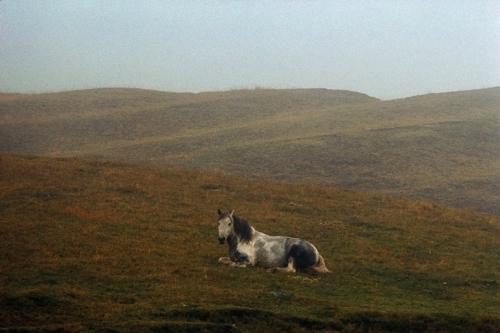 Bruce Davidson Pays de Galles 1965_n.jpg