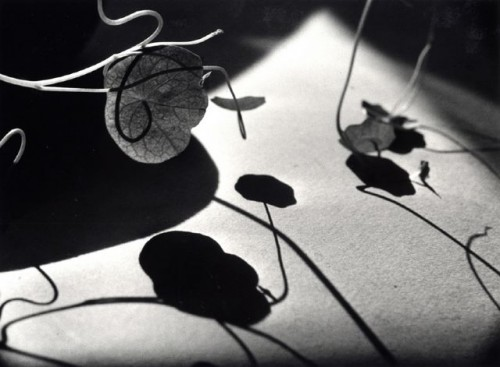 ernst-haas leaves and shadows.jpg