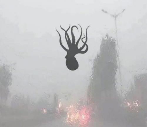 octopus-fall-from-sky-chin city of Qingdao 13 juin 2018.jpg