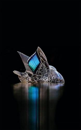 Georgina Steytler Miroir spéculaire Australie.jpg