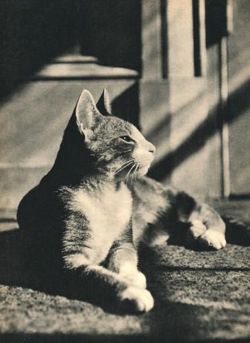 Edward Quigley Sam 1937.jpg