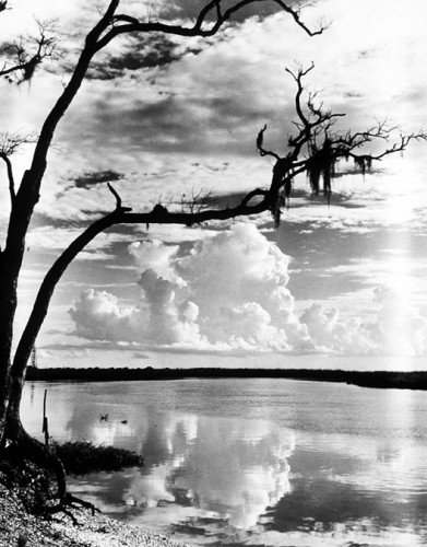 todd webb Weeks Bayou at Weeks Island, Louisiana .jpg