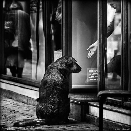 denis buchel dog's life98613.jpg