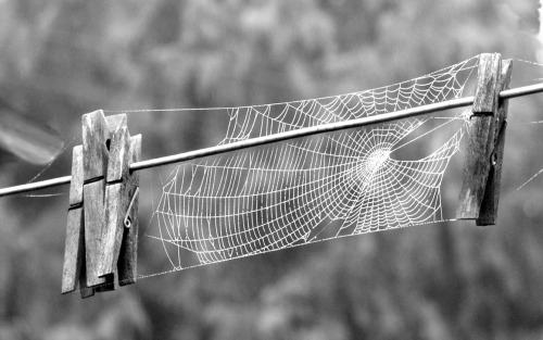TomLottie Clothspin Spiderweb.jpg