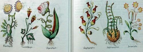 Luigi Serafini codex plants.jpg