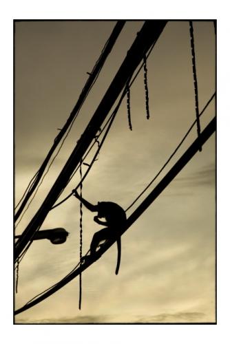 Simon Kolton monkey's cityl24.jpg