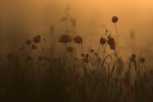 marcin sacha flower 9.jpg