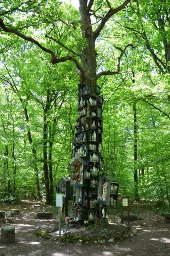 Le Chêne à la Vierge  Ille-et-Vilaine, entre La Guerche-de-Bretagne et Rannée.jpg