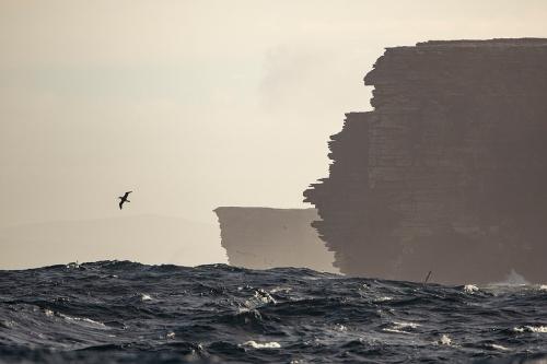 Justin Hofman West Falkland Island_2.jpg