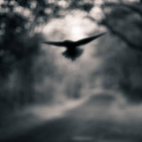 tami bone BlackWingedBird.jpg