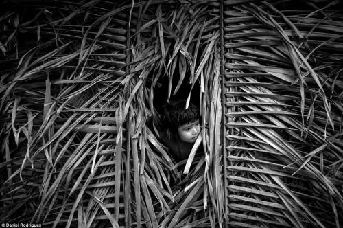 Daniel Rodrigues  Awá_Amazonie Brésil8_n.jpg
