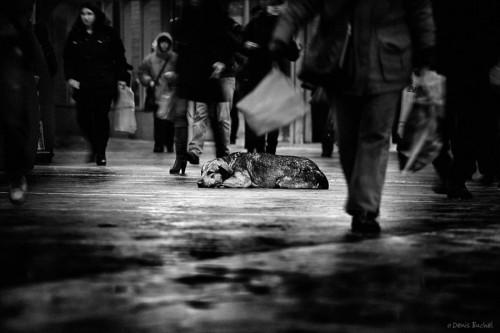 denis buchel dog's life.jpg