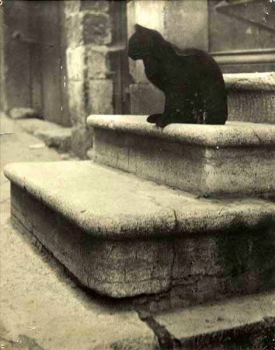 Brassaï, Black Cat on Steps, c.1945_n.jpg