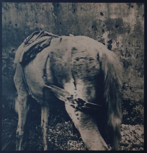 allan-jenkins-1995-le-bestiaire-imaginaire.jpg